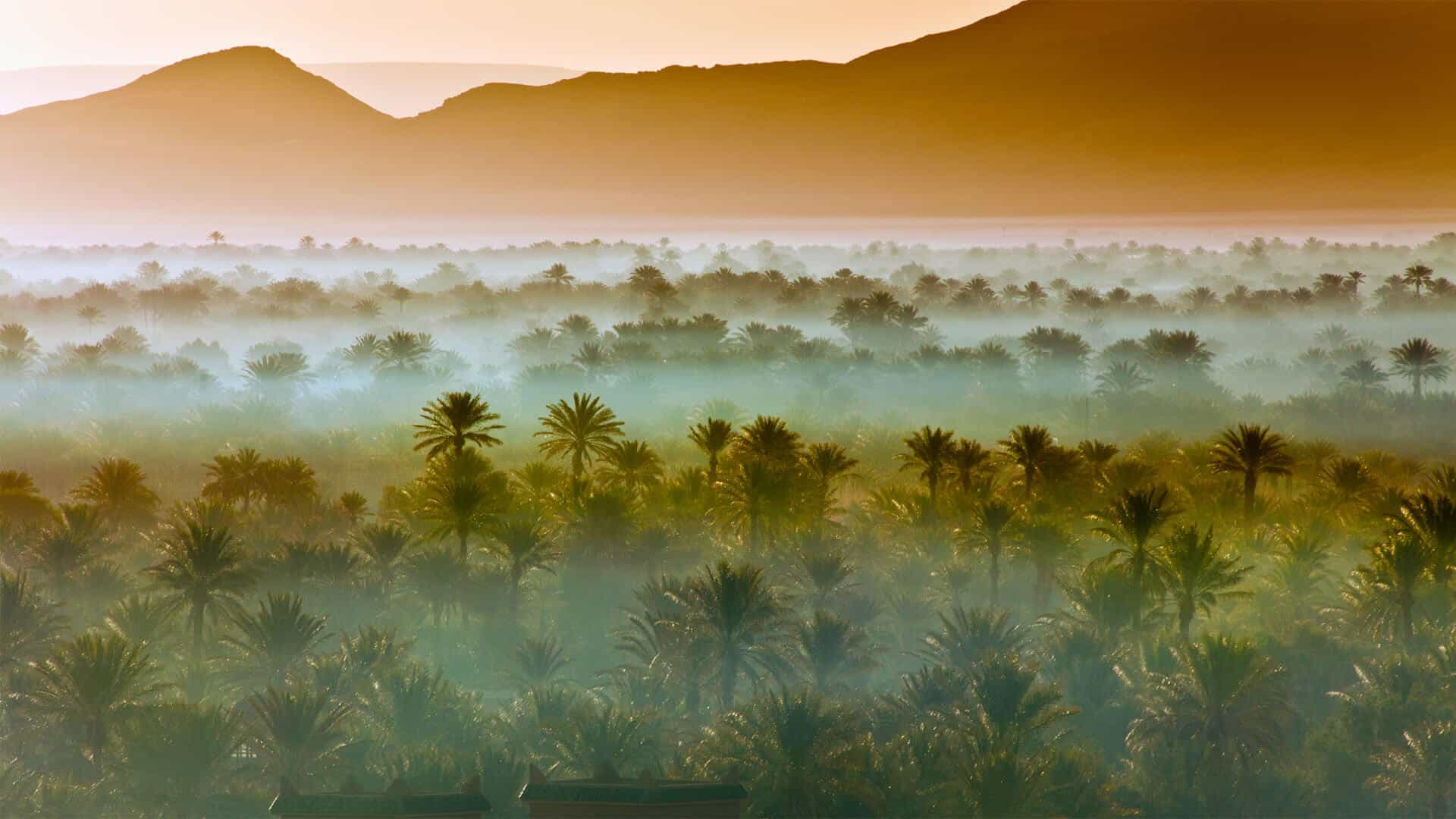 Desert groves at Zagora